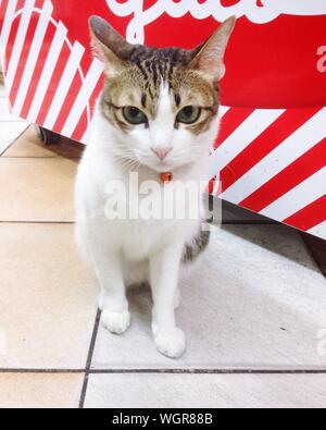 Close-up Of Tabby Cat Indoors - Stock Photo