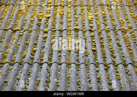 High Angle View Of Moss Covered Roof - Stock Photo