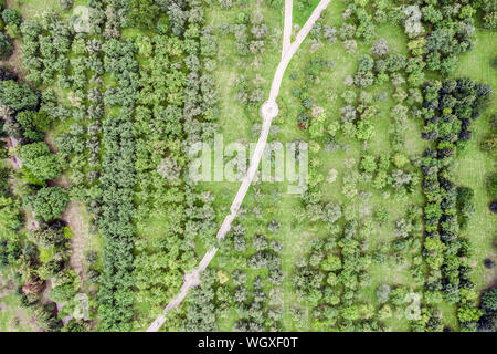 aerial top view of the footpath through apple trees orchard - Stock Photo