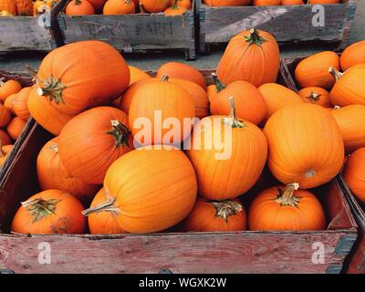 Stack Of Pumpkins For Sale - Stock Photo