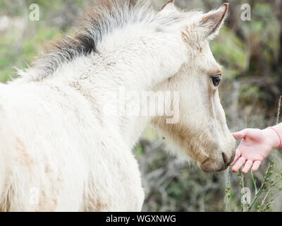 Cropped Hand Touching Horse Standing Outdoors - Stock Photo