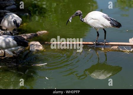 Bird and Reflection. ornito and nature photo - Stock Photo