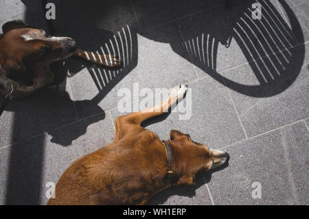 High Angle View Of Dogs Sleeping On Ground - Stock Photo