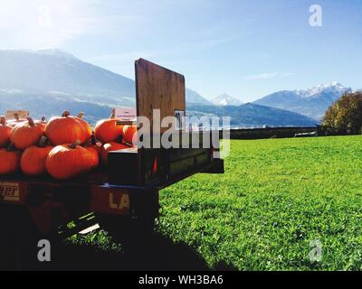 Stack Of Pumpkins In Truck On Grassy Field Against Sky During Halloween - Stock Photo