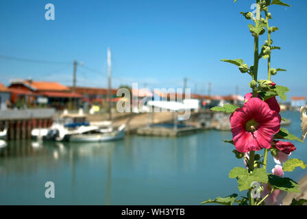 Close-up Of Hollyhock Flower Against Harbor - Stock Photo