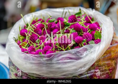 Bags of purple сlover or trefoil for making traditional flower garland offerings phuang malai at Pak Khlong Talat, Bangkok flower market. Thailand - Stock Photo