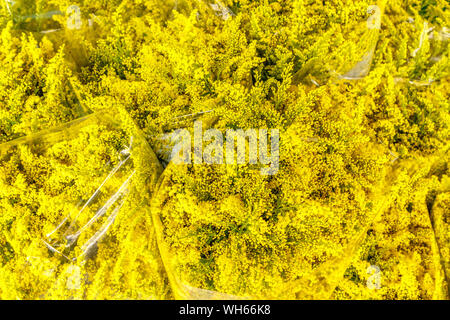 Bouquets of Solidago or goldenrods flowers at Pak Khlong Talat, famous flower market in Bangkok, Thailand. - Stock Photo