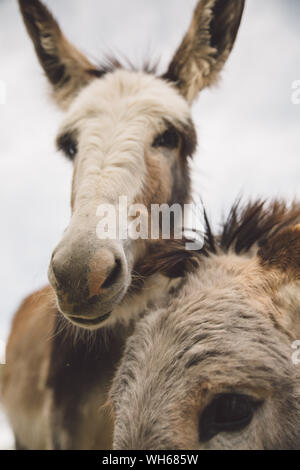 Low Angle View Of Donkeys Against Sky - Stock Photo