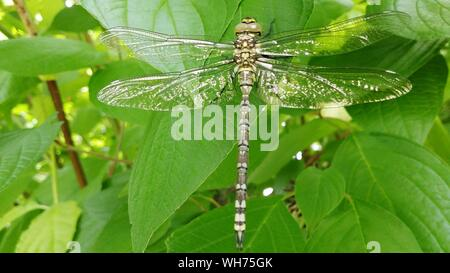 Close-up Of Libelle On Plants - Stock Photo