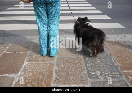 Dog On Zebra Crossing - Stock Photo