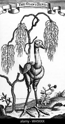 A large bird supposedly seen in Mauritius in the late 1600s by the Hugenot refugee Francois Legnat. Engraving from Legnat's New Voyage to the East Indies (London, 1708) - Stock Photo