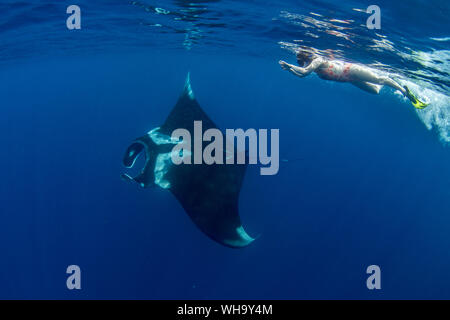 Oceanic manta ray (Manta birostris) feeding near the surface, Honda Bay, Palawan, The Philippines, Southeast Asia, Asia - Stock Photo