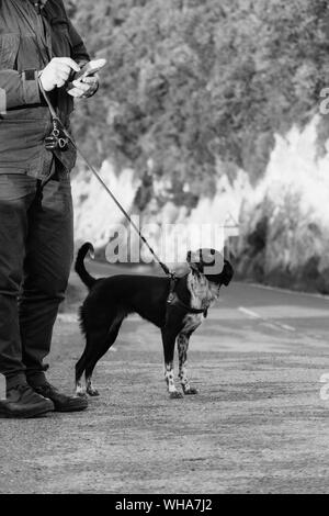 Cropped Image Of Man Holding Leash Of Dog While Using Smart Phone At Field - Stock Photo