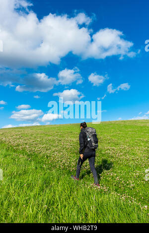 Female hiker on footpath through field of clover near Kildale, North York Moors National Park, North Yorkshire, England. UK. - Stock Photo