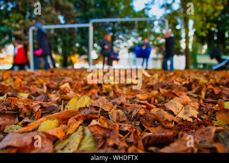 Close-up Of Dry Maple Leaves Fallen On Tree - Stock Photo