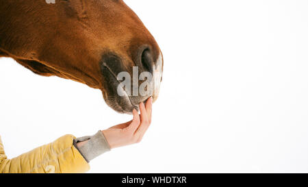 Cropped Hand Of Woman Touching Horse Mouth Against White Background - Stock Photo