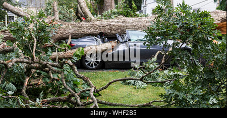 A car gets smashed when a tree falls over during a summer storm. - Stock Photo