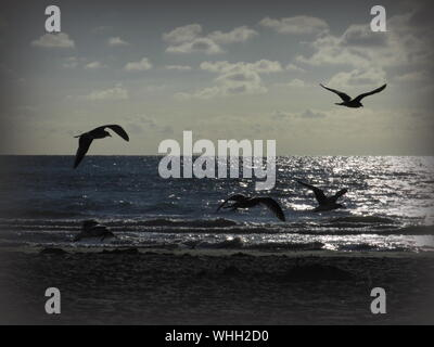 Silhouette Seagulls Flying At Beach Against Sky During Sunset - Stock Photo