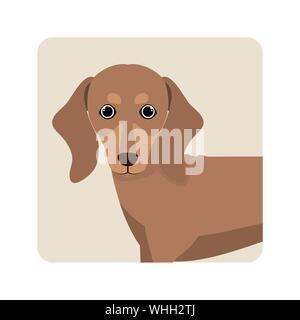 cute dachshund dog on white background - Stock Photo