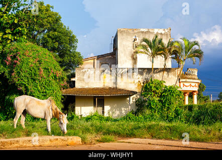 A white horse grazing in front of an old white house in Cuba - Stock Photo