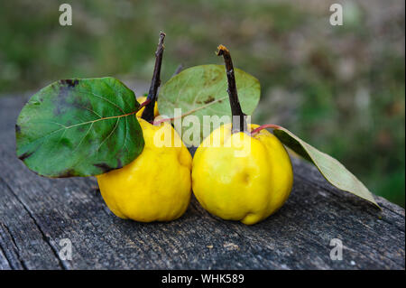 Close-up Of Quinces On Wooden Table - Stock Photo