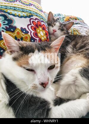 Close-up Of Cats Resting On Pillows - Stock Photo