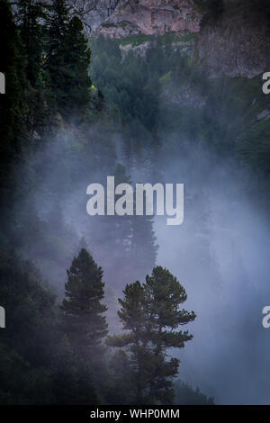 High Angle View Of Trees In Foggy Weather At Berchtesgaden - Stock Photo