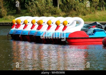 Swan Shaped Boats In Lake - Stock Photo