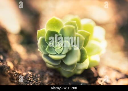 Close-up Of Cactus - Stock Photo