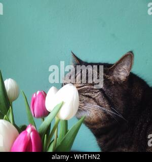 Close-up Of Cat By Tulips At Home - Stock Photo