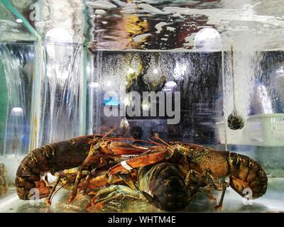 Close-up Of Crayfish In Fish Tank At Restaurant - Stock Photo
