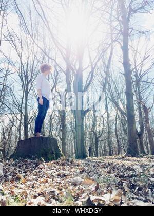 Sun Shining Through Bare Tree - Stock Photo