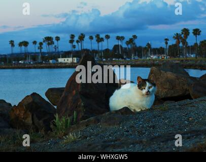 Portrait Of Cat Sitting At Lakeshore During Sunset - Stock Photo