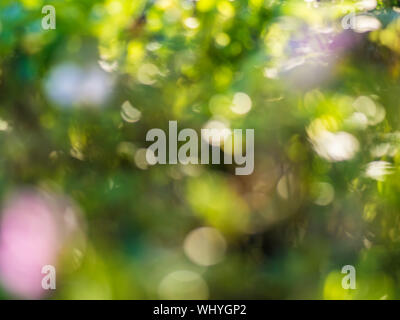 Natural bokeh background of out of focus flowers. - Stock Photo