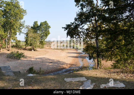 View of of tropical forest, Sal trees and grassland spread over the forest divisions of Umaria and Katni in Bandhavgarh National Park during a road tr - Stock Photo