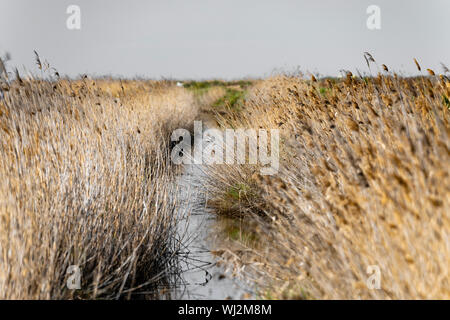 A path through a lot of dry grass on a sunny day with an unfocused background. Photo in summer. Close-up - Stock Photo