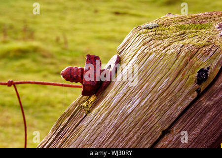 Close-up Of Rusty Nut And Bolt On Wood - Stock Photo