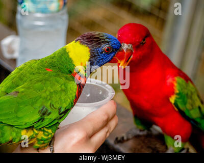 Close-up Of Parakeets Perching On Person Hand - Stock Photo