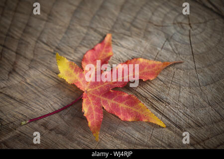 Close-up Of Autumn Leaf On Tree Stump - Stock Photo
