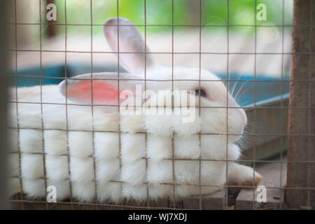 Close-up Of Rabbit In Cage - Stock Photo