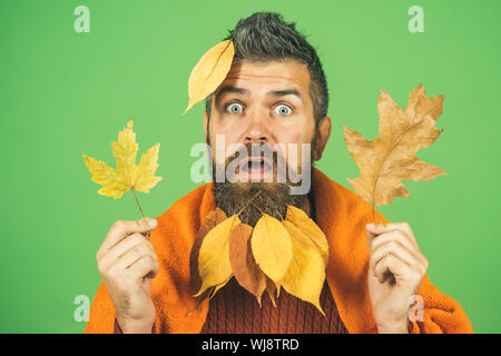 Man with natural yellow fall leaves beard in plaid. - Stock Photo