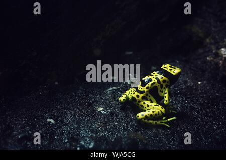 Close-up Of Frog On Ground - Stock Photo