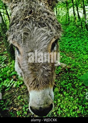 Donkey In Forest - Stock Photo