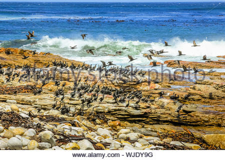 Scenic View Of Birds Flying Over Sea - Stock Photo