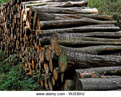Large Stack Of Logs In Forest - Stock Photo