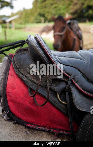 Detail of saddle on horse maintained for tourist riders in Costa Rica - Stock Photo