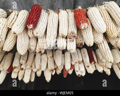 Close-up Of Dried Corn - Stock Photo
