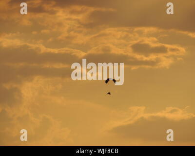 Low Angle View Of Paraglider Flying In Sky - Stock Photo
