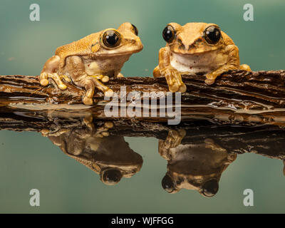 Close-up Of Frogs By Pond - Stock Photo