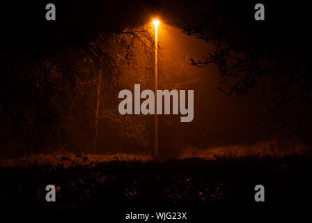 Street light lights up a secluded misty rural road with overhanging vegetation and a hedge in the foreground. - Stock Photo